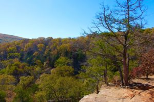 3 Reasons to Go Camping at Devil's Den State Park