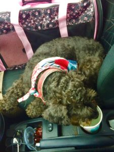 How to Survive a Roadtrip With Pets