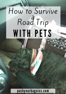 How to Survive a Road Trip With Pets