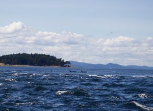What to See & Do in Orcas Island, Washington State