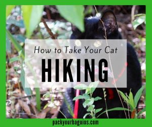 How to Take Your Cat Hiking