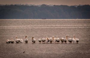 Camping at Reelfoot Lake State Park in Tennessee
